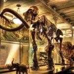 Музей Естественной истории, Лос Анджелес