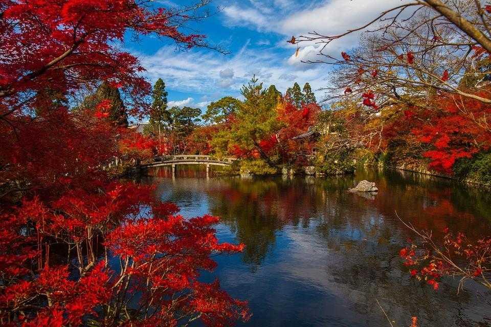 Япония, парк