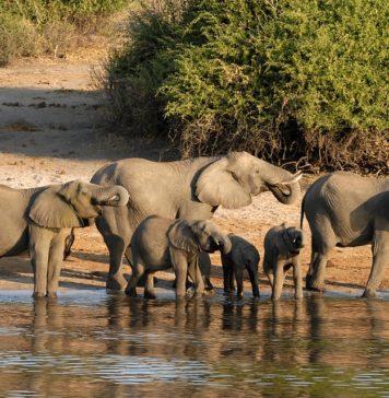 Африка,сафари, Ботсвана, слоны
