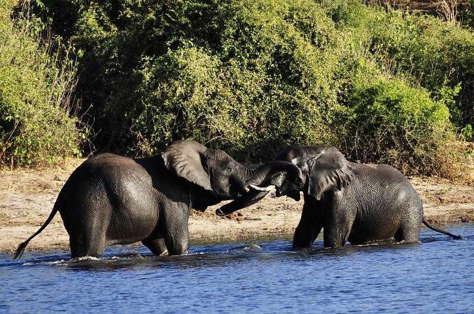 Ботсвана, сафари, слоны, африка