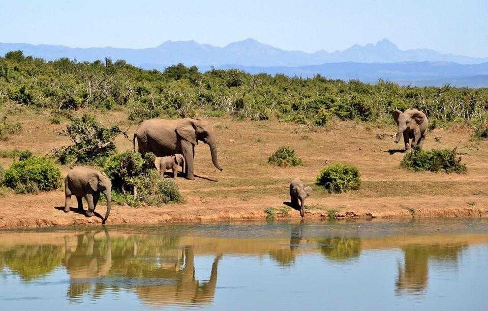 Африка, слоны, животные