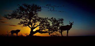 Африка, природа, пустыня, саванна