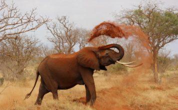 Кения, сафари, отпуск