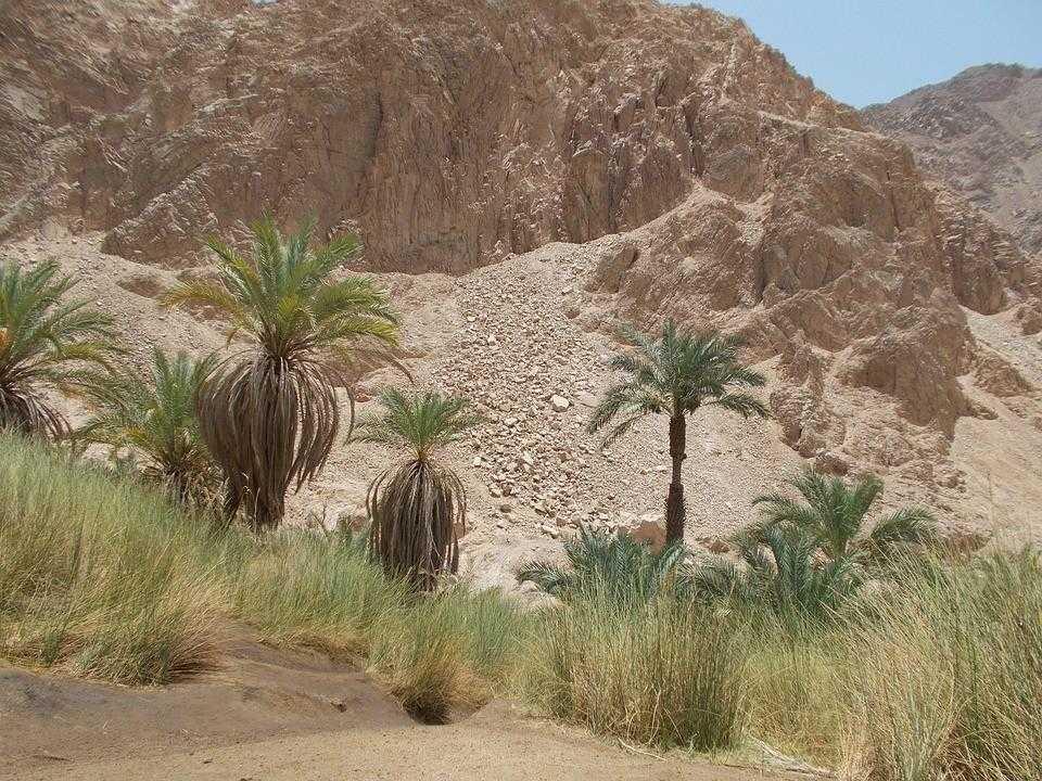 оазис, египет